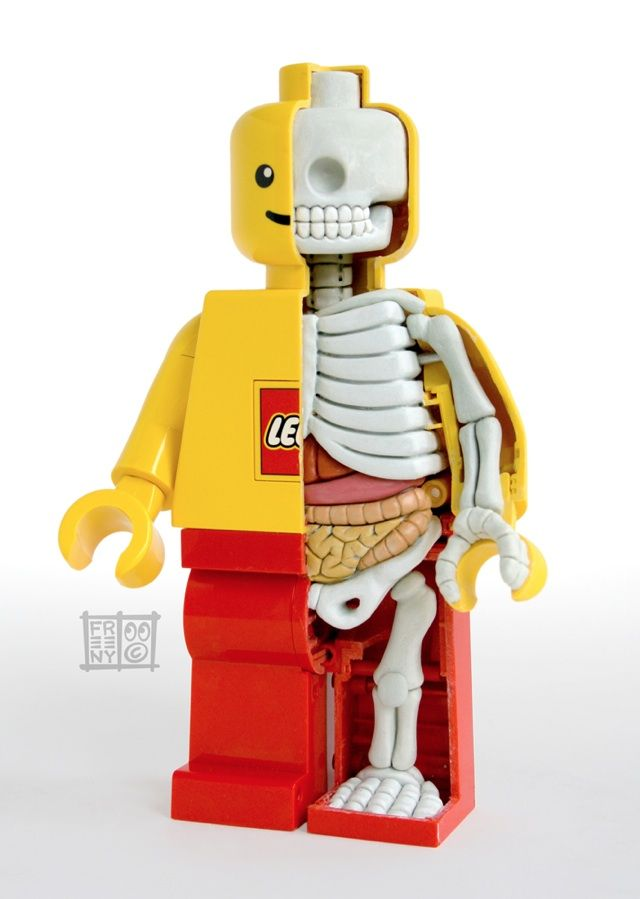 LEGO MiniFigure Anatomy Sculpture by Jason Freeny 생물시간 교재로 레고…