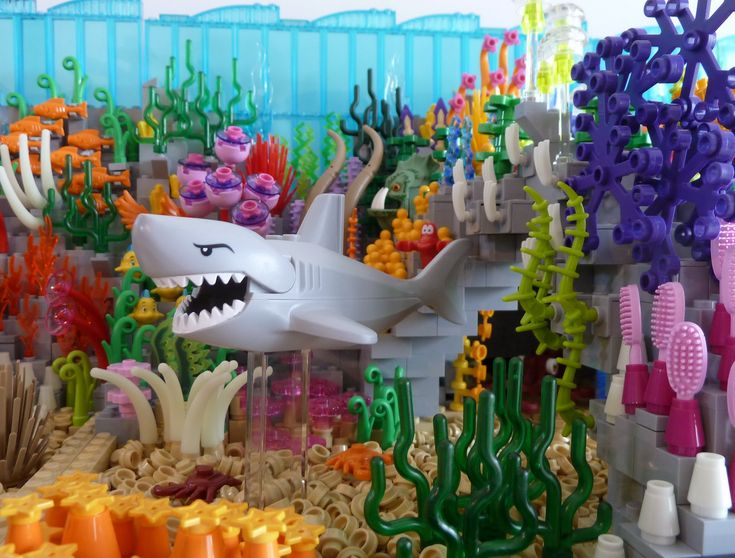The Coral Reef and the Shark